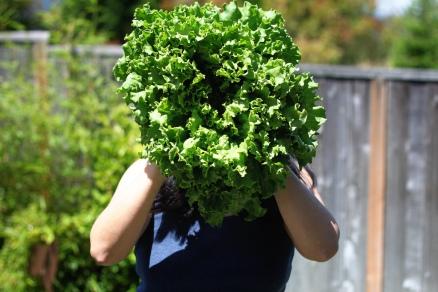 lettuce head in front of a woman's head